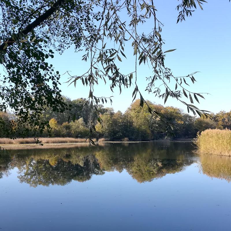 Les étangs de Crosagny